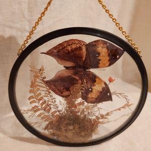 Vintage Nature Display